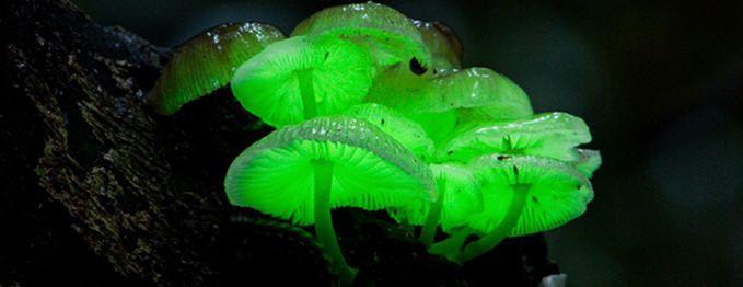 Glow in the Dark Mushroom  Growing Habitat Kit. $26.95, via Etsy.
