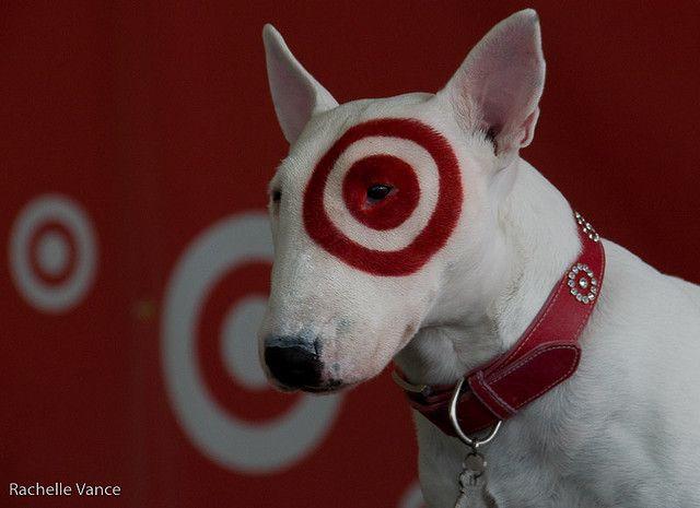 Bullseye My Style Mini Bull Terriers English Bull