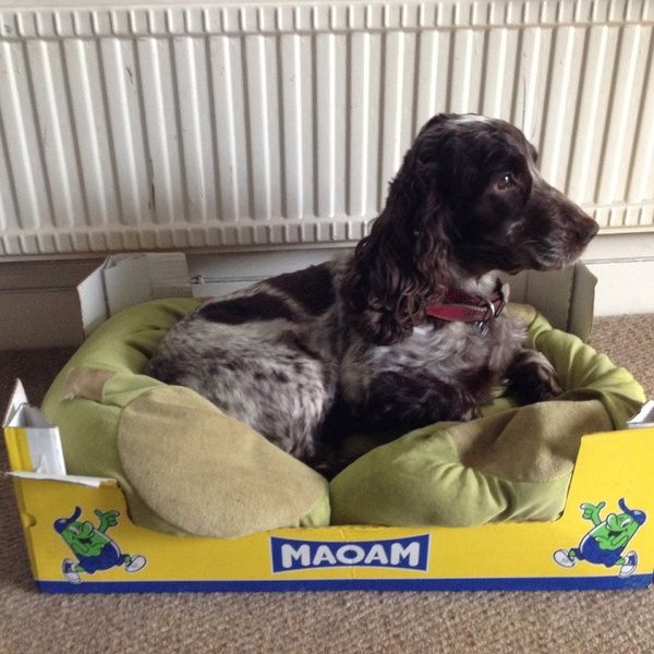Housesitting Assignment In Upton Grey Basingstoke Hampshire Rg25