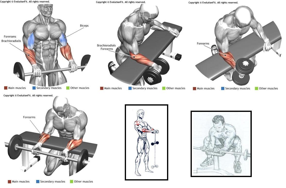 Resultado de imagen de ejercicios de antebrazo