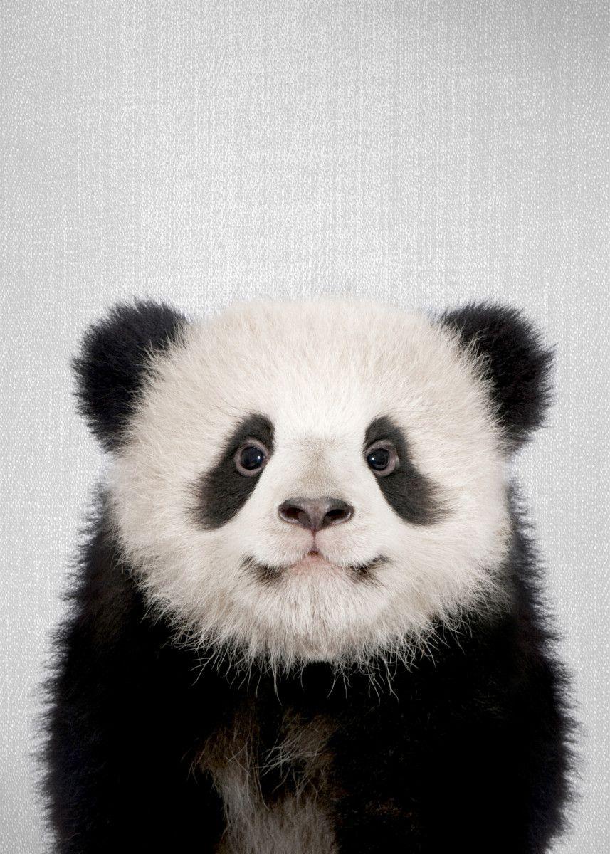 Baby Panda Bear Colorful Animals Poster Print Metal Posters