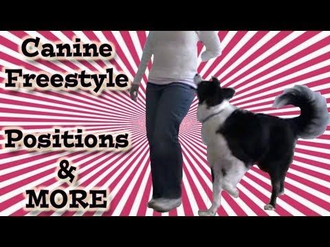 Canine Freestyle Positions And Heel Work This Is A Video That Is