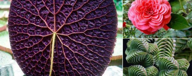 22 asombrosas especies vegetales geométricas | La Bioguía