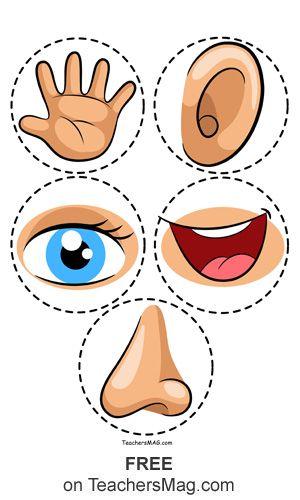 Free Five Senses Worksheets