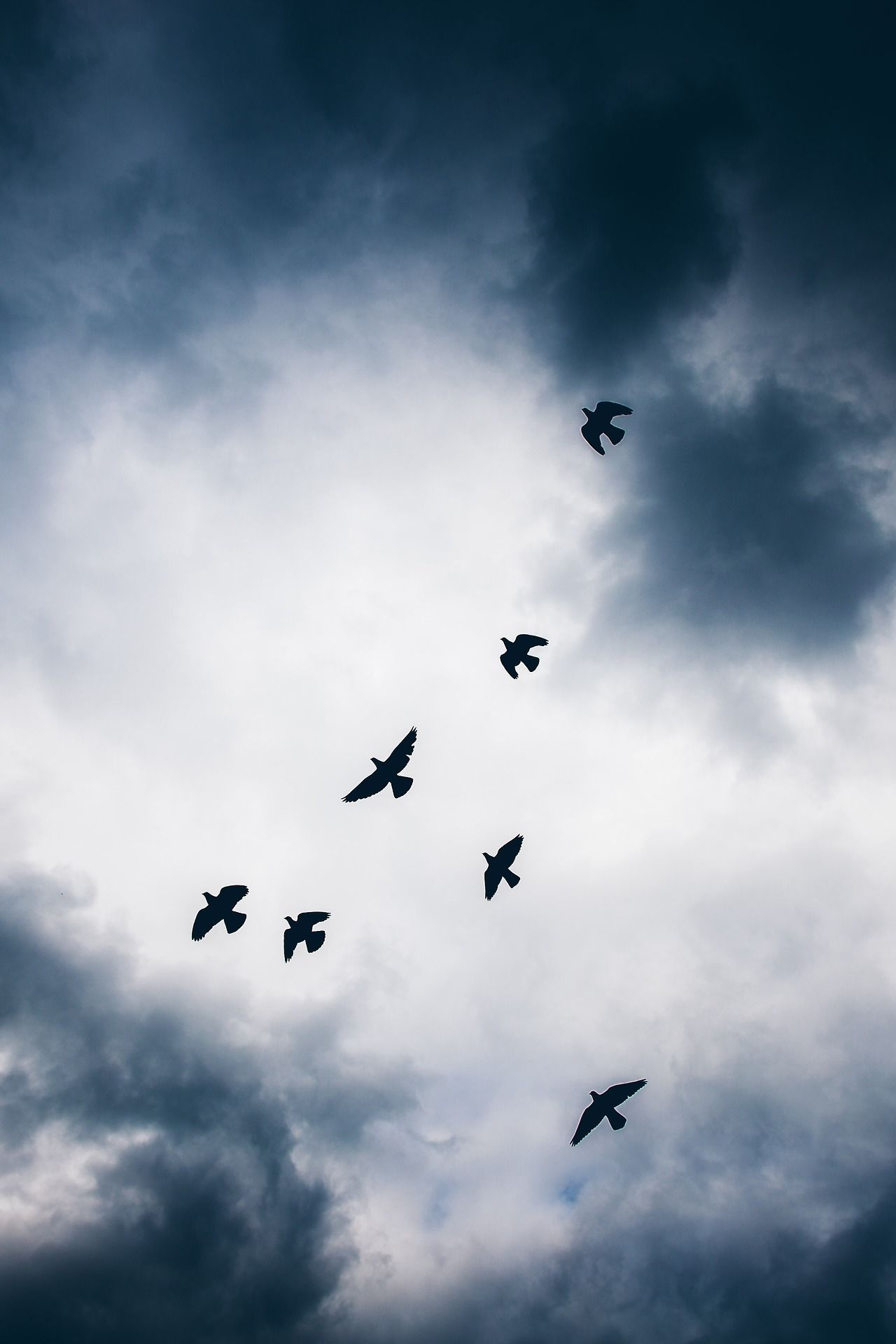 Birds flying high in the sky | Dark Photography ...