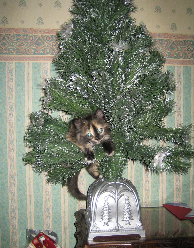 Cat Destroys Christmas Tree Car Memes catcondo