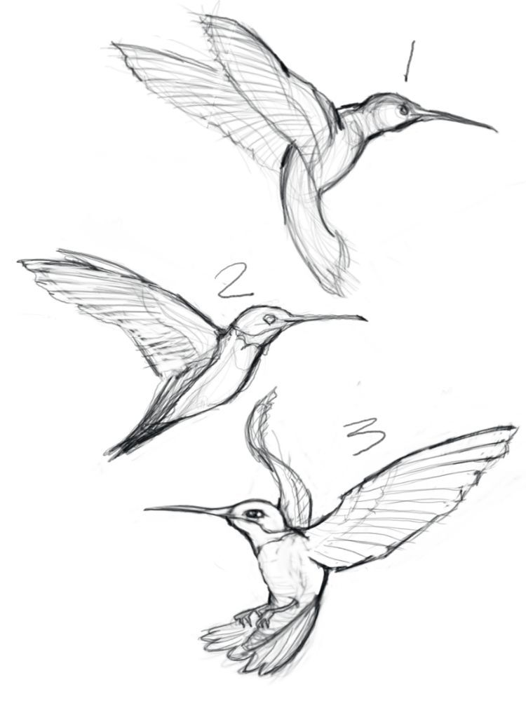 Sketches Of Hummingbirds With Flowers Google Search Drawing