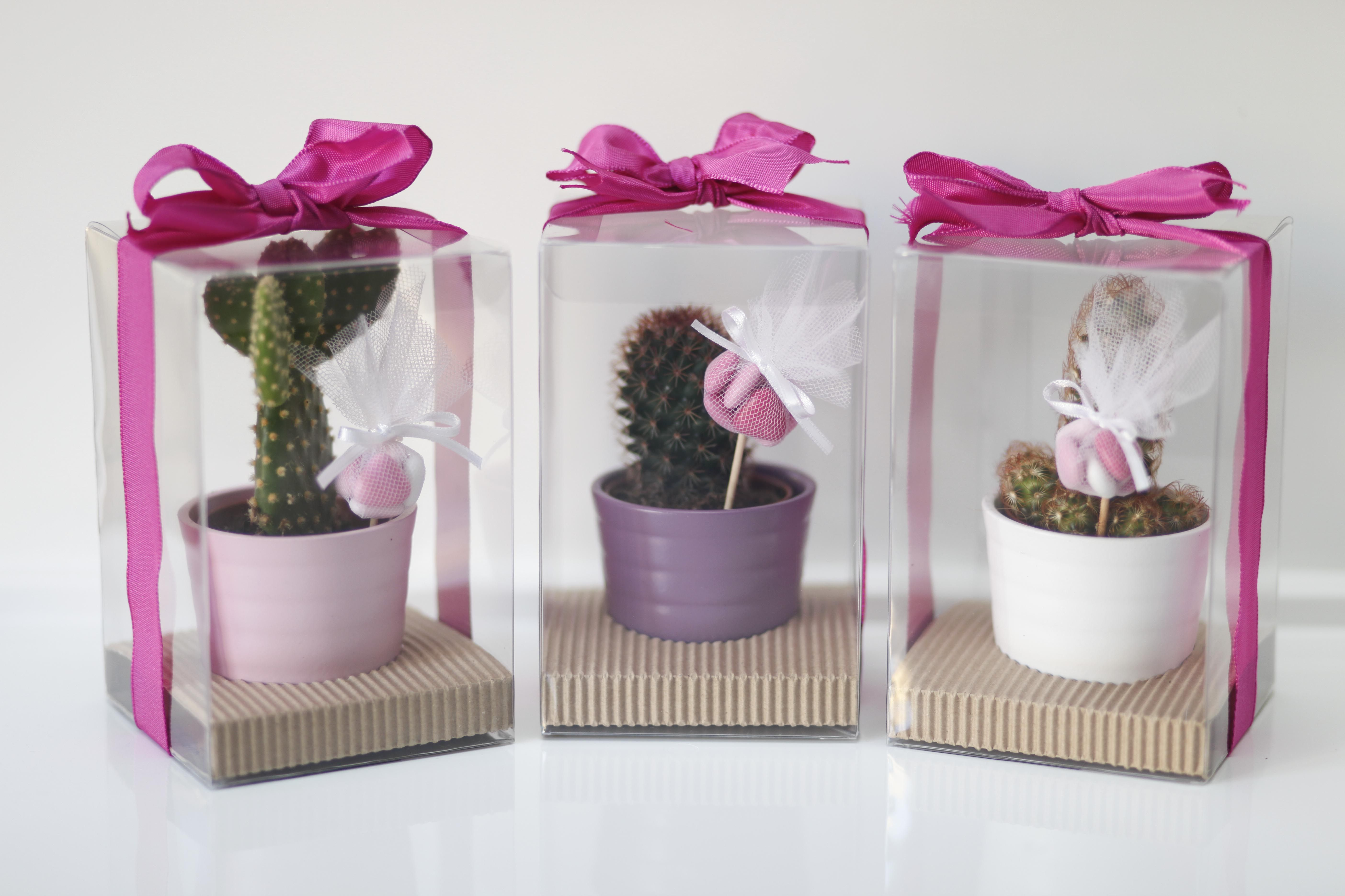 Bomboniera mini pianta grassa | comunione | Pinterest | Cacti ...