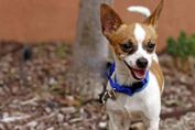 I am just the cutest little guy ever--everyone says so. ► Come meet me at Animal Humane NM.
