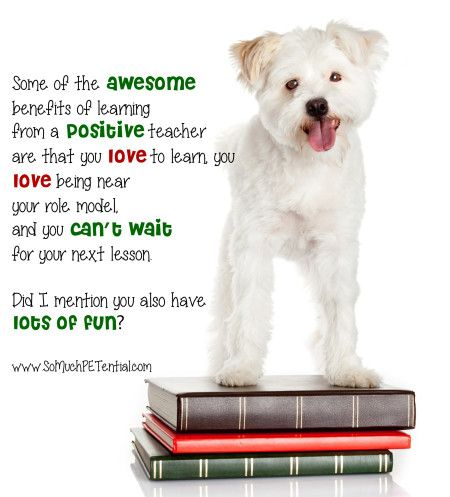 Some Of The Benefits Of Using Positive Reinforcement Dog