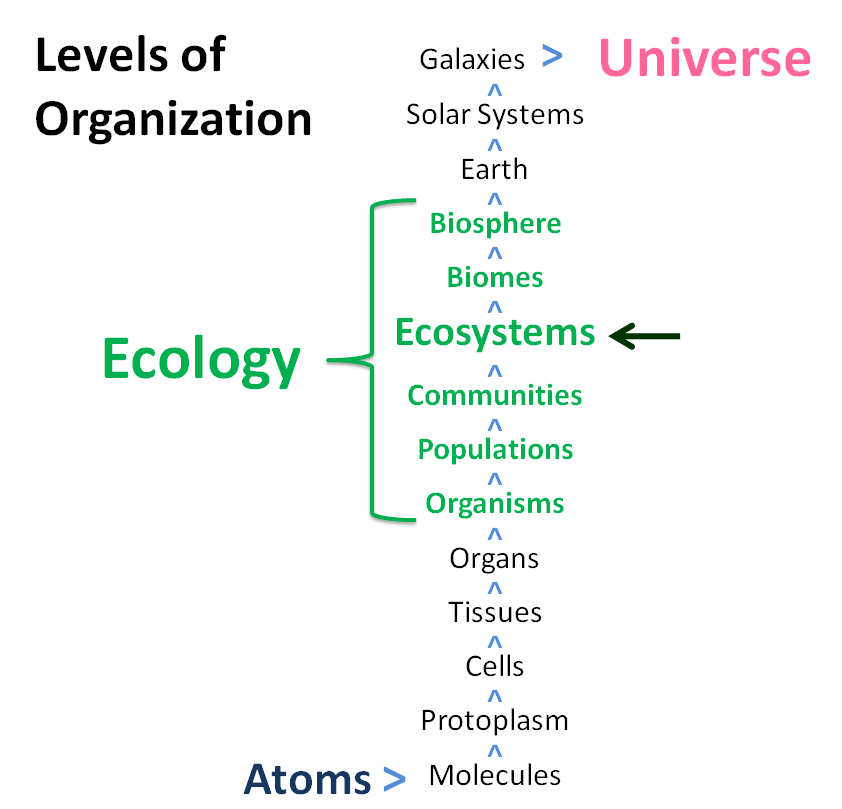 Levels of organization, from the universe down to atoms. | Life on ...