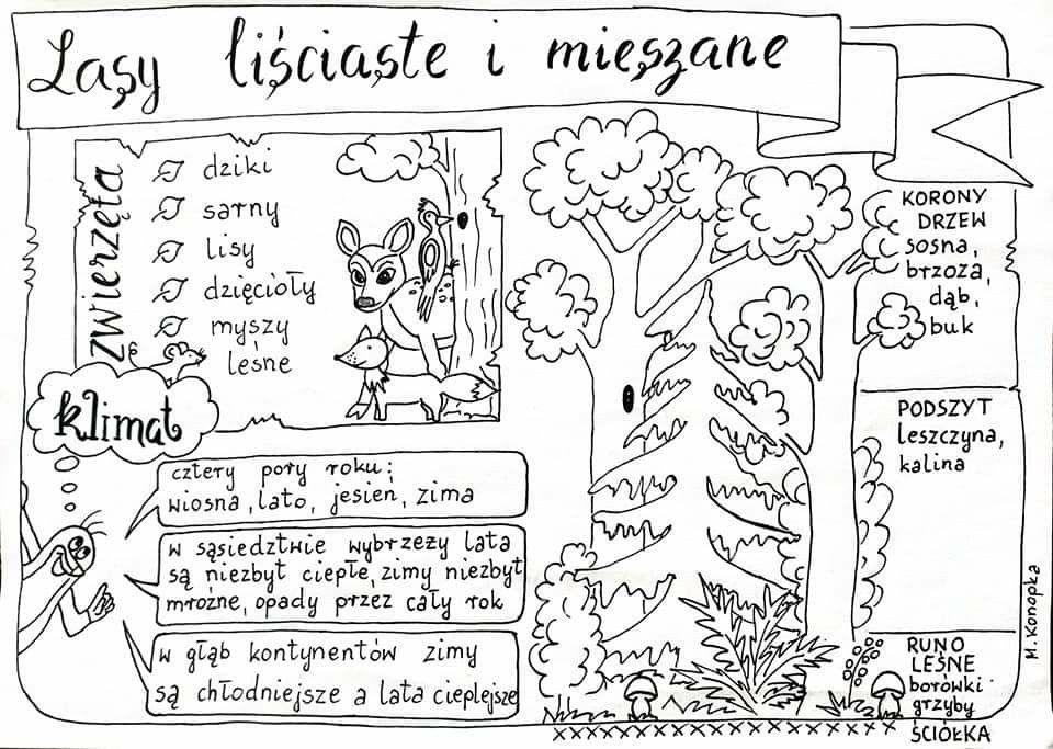 Pin By Iza Czopek On Nop School Sketchnotes Learning