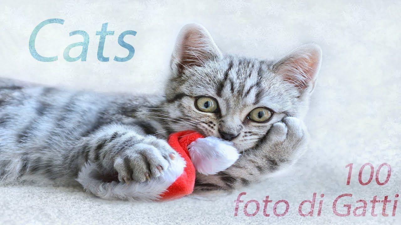 Foto Di Gatti Hd Cats Pictures Youtube Video Funny Cute Cats