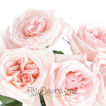 Garden Rose Soft Pink Ohara L Flower Bouquet Wedding Pink Rose