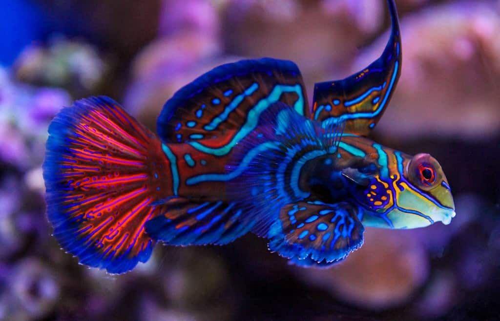 9 Best Saltwater Fish For A 55 Gallon Tank Salt Tank Report In 2020 Beautiful Fish Marine Aquarium Fish Reef Safe Fish