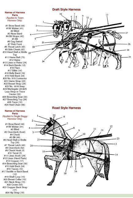 A Pair Of Horse Harness Diagram Product Wiring Diagrams