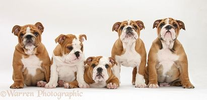 Dogs Puppies Dog Families 1 Puppy Dog Photos Dogs And Puppies Dogs