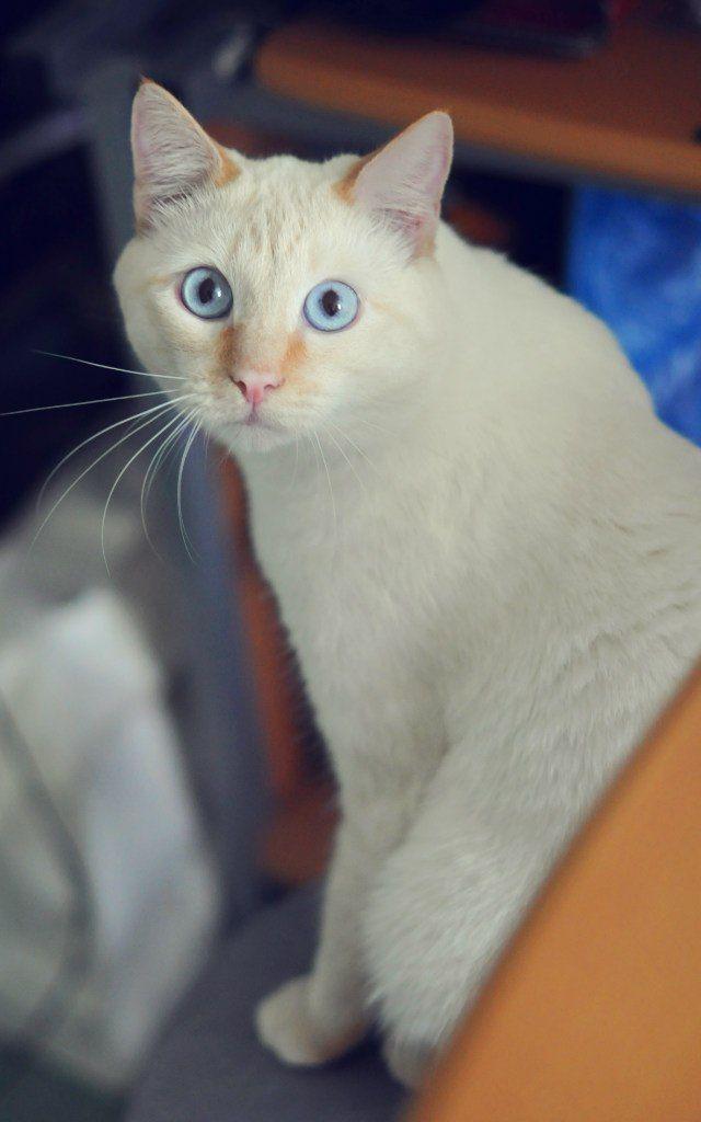 Pin On Animals Kitties