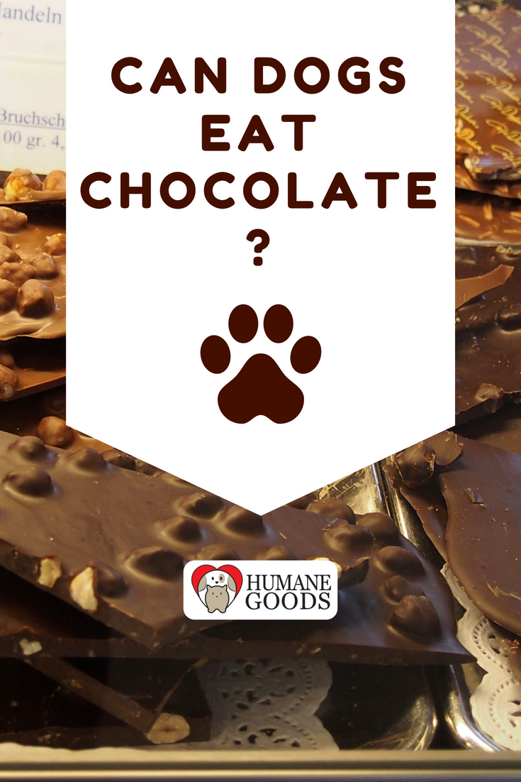 Can Dogs Eat Chocolate What Happens When Your Dog Eats Chocolate