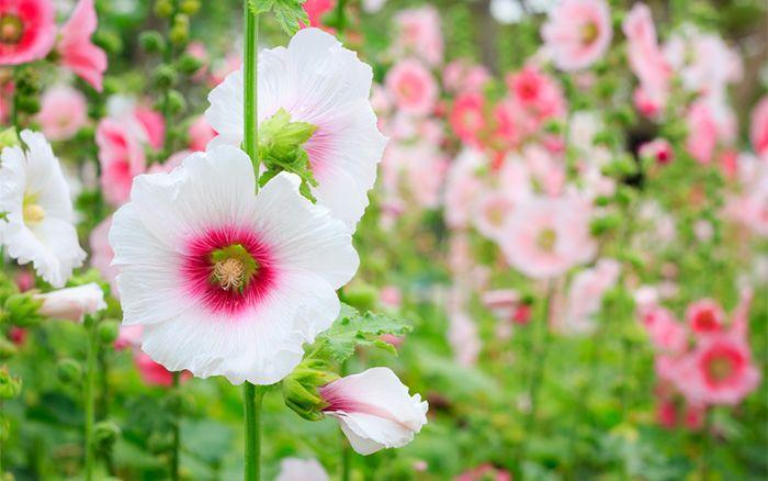 What does perennial biennial and annual plants mean garden dd0471515fc01c6ab793f1ee498049a5g mightylinksfo