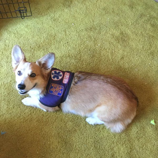 We Are Custommadeveteranservice Provider For Dogvests In Usa We