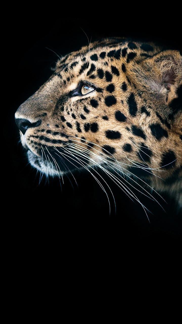 Download Leopard wallpaper by Matt8174 now. Browse