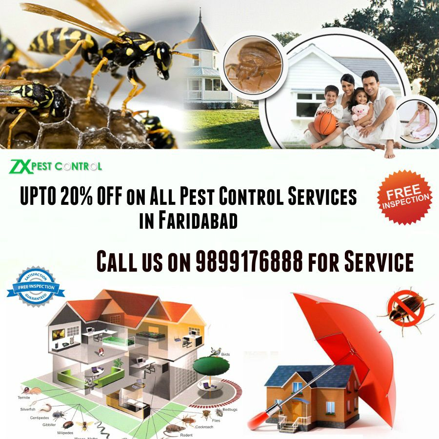 UPTO 20% OFF on All Pest Control Services in Faridabad-9899176888 or visit https://goo.gl/Tc3Ths #Residential #commercial #corporate #pest #control #Faridabad