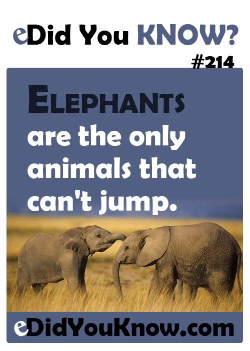 did you know facts about animals did you know 214 animals genius