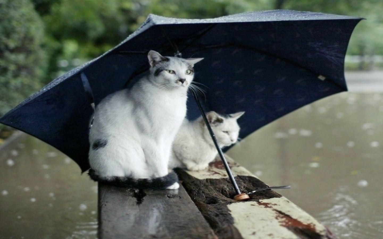 Прикольные фото в дождь