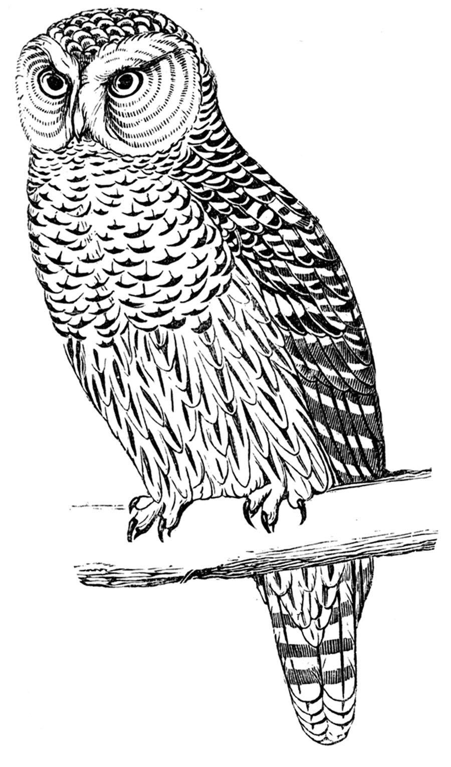 Free Digital Stamp Owl Image Digital stamps, Owl, Stamp