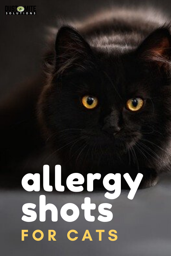 Cat Allergy Shots Do They Work Cost Cat Allergies