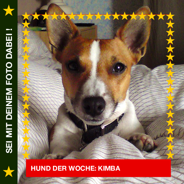Jack Russel Kimba Das Bett gehört mir !! #Hund: Kimba / #Rasse: Jack Russel Mehr Fotos: https://magazin.dogs-2-love.com/hund-der-woche/jack-russel-kimba/ Foto, Hund, schlafen