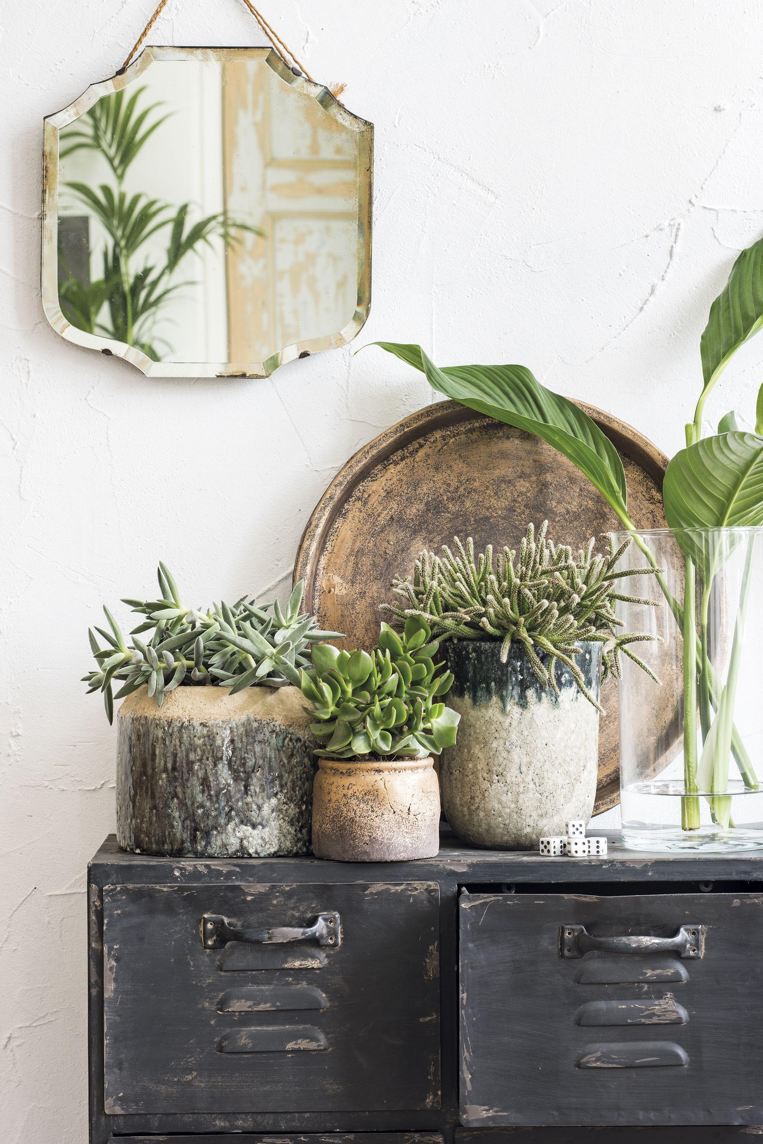 Stoere kast #kamerplanten #intratuin | Industrial Design | Pinterest ...