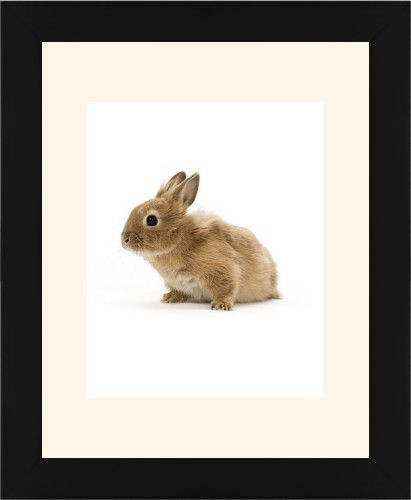 Bunny Framed Print, Black, Contemporary, None, Cream, Single piece, 8 x 10 inches