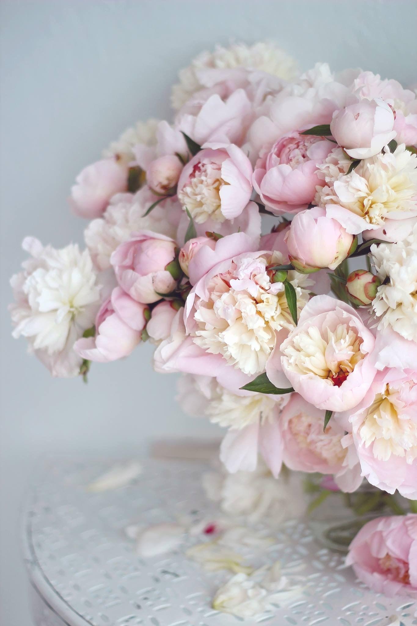 Красивый нежный цветок картинки