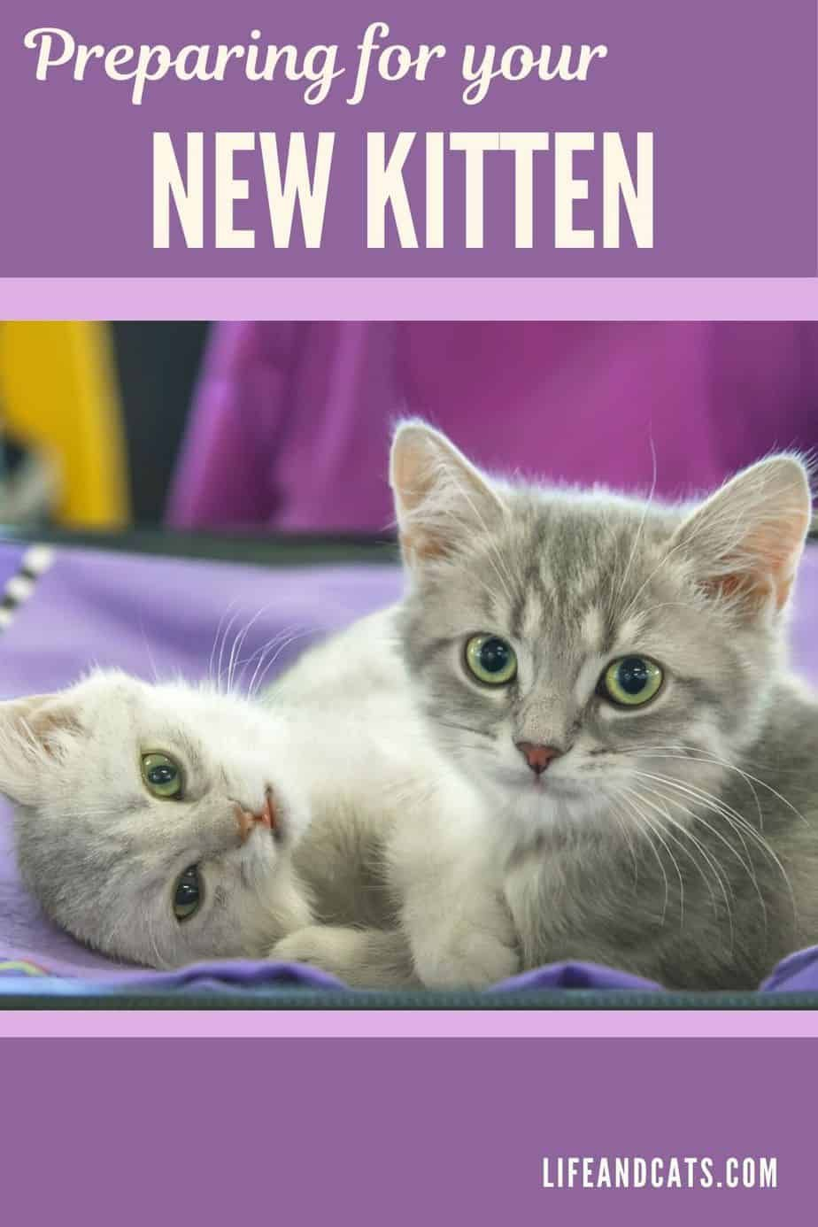 6 Tips For Preparing To Bring Home Your New Kitten Life Cats In 2020 Kitten Kitten Care Cats And Kittens