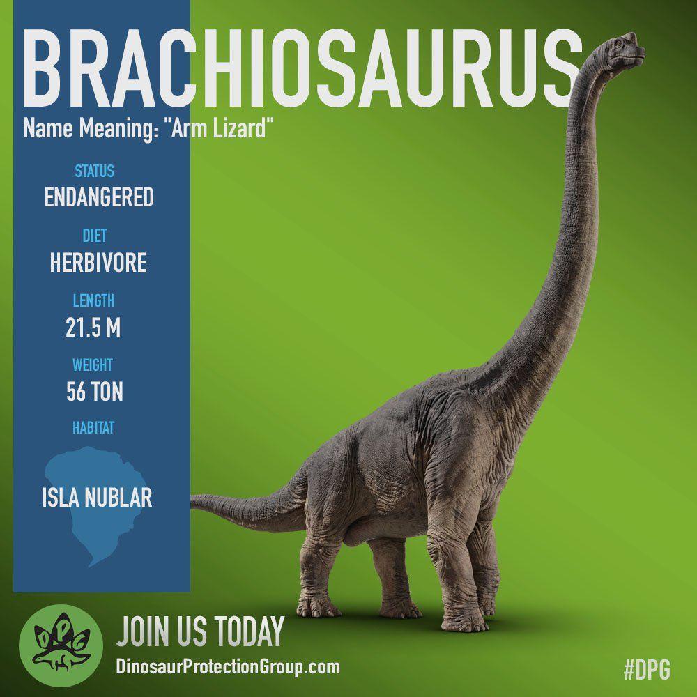 Brachiosaurus | Jurassic Park//Animals | Pinterest | Parque jurásico ...