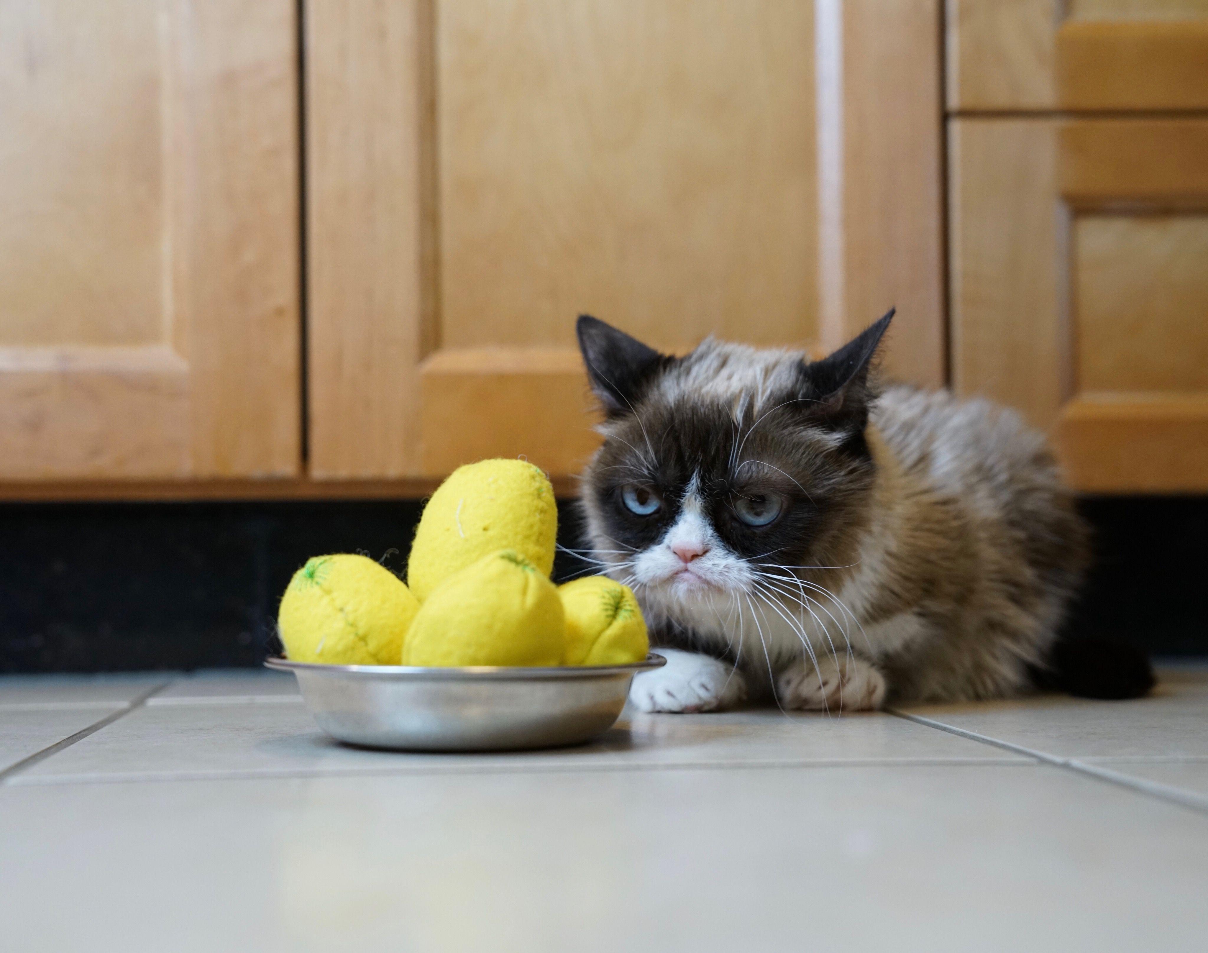 Grumpy Cat Toys Are Available At Petsmart Enter Grumpy Cat Lemon Balls According To Grumpy When Life Gives You Lemons Diy Cat Food Cat Plants Teacup Cats