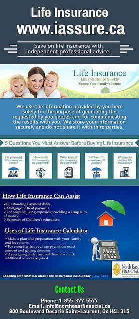 Multiple Life Insurance Quotes Entrancing Purchaselifeinsurance  Life Insurance Life Insurance Quotes