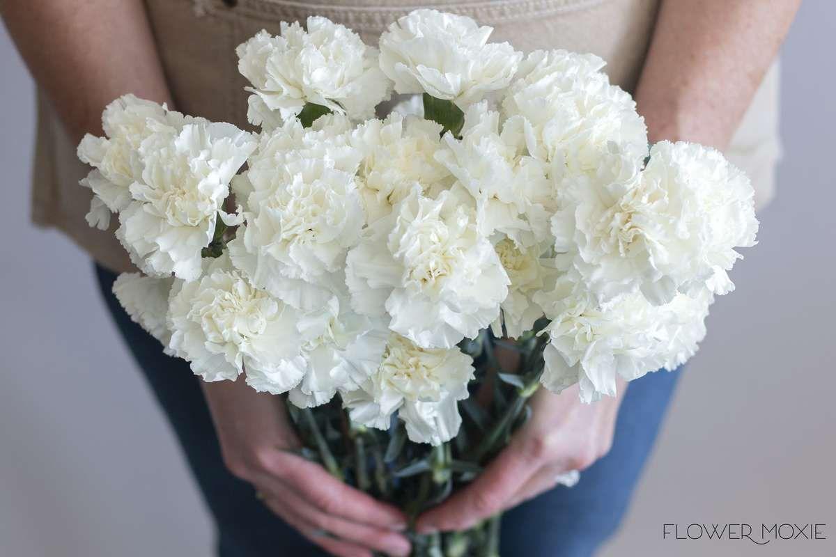 White Carnation Flowerdefault Title Carnation Flower Fresh Wedding Flowers White Carnation