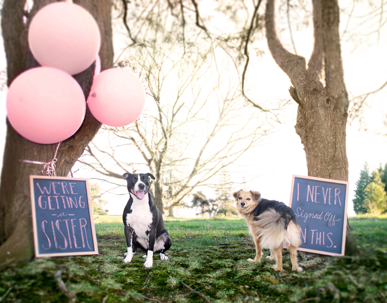 Dog gender reveal for baby girl Baby Bacco Pinterest
