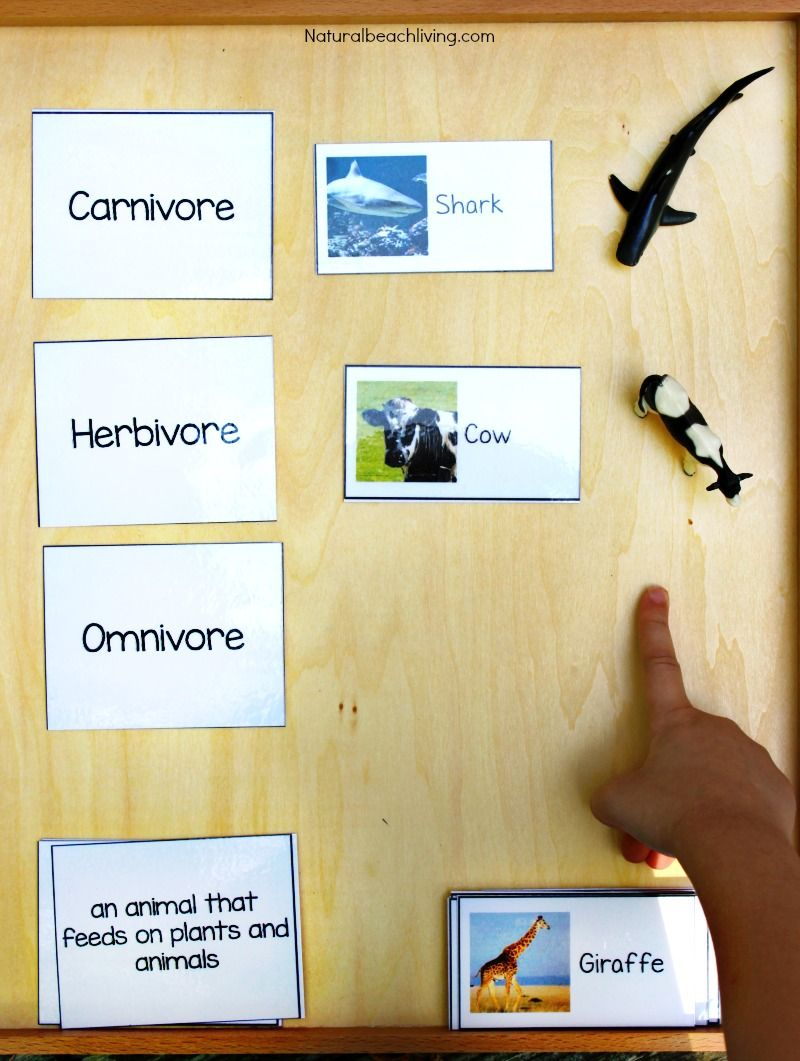 Montessori Science For Kids Animal Sort Activity Printables Food Chain Hands On Activit Animal Activities For Kids Montessori Science Montessori Activities [ 1061 x 800 Pixel ]