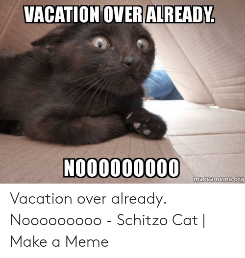 Vacation Is Over Meme Google Search Cat Memes Funny Cat Memes Funny Cats
