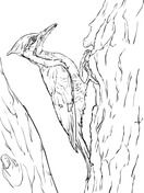 Pileated Woodpecker Coloring Page Birds Kids Sheets Pinterest