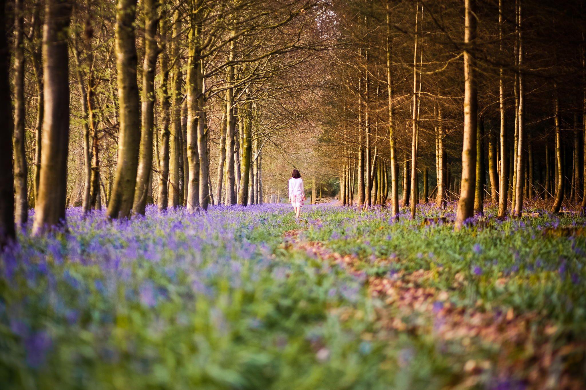Bluebell Woodland by Sasha L'Estrange-Bell on 500px
