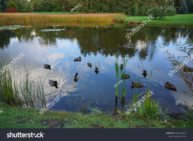 Beautiful Autumn Landscape Small Pond In The Autumn Park Mallard Ducks Autumn In Park Sponsored Ad Landscape Autumn Landscape Small Ponds Landscape