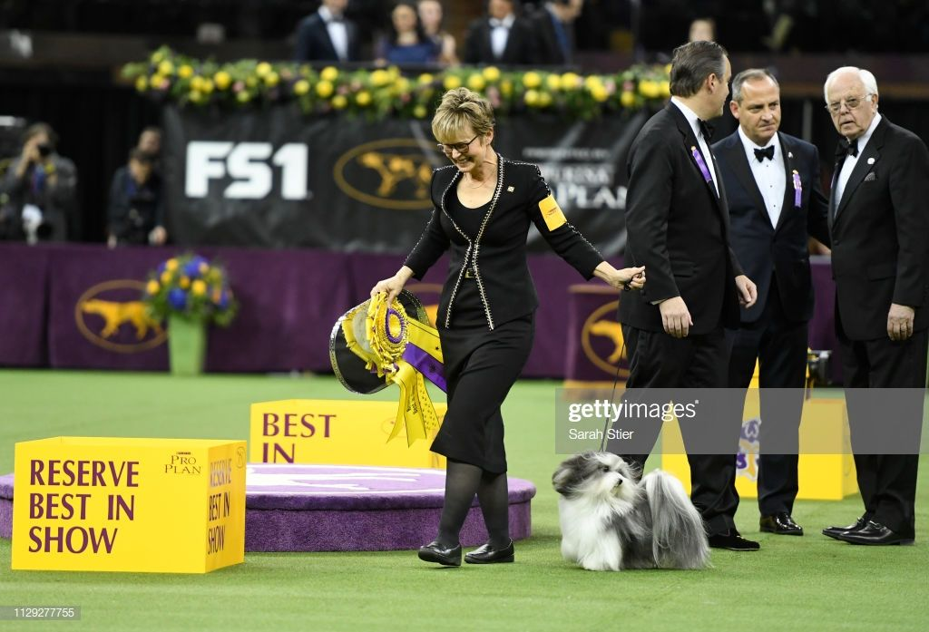 Taffe Mcfadden Celebrates With Bono The Havanese After Winning