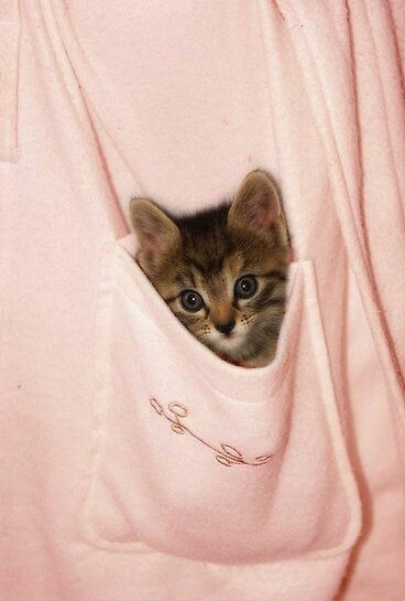 Etheral Shared By Dexcritos On We Heart It Cute Cats Kittens