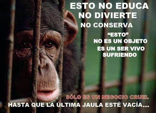 No Zoológicos No Circos Derechos De Los Animales