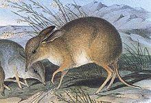 Liste Der Neuzeitlich Ausgestorbenen Saugetiere Wikipedia Ausgestorbene Tiere Saugetiere Exotische Tiere